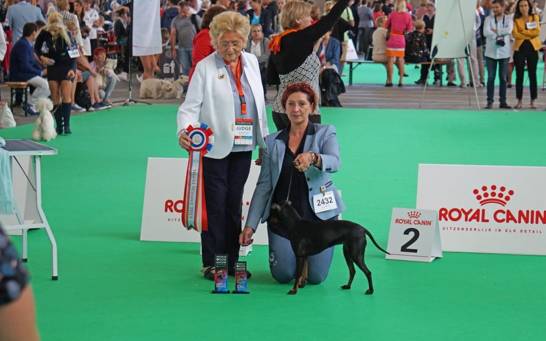 + World Dog Show 2018 A'dam