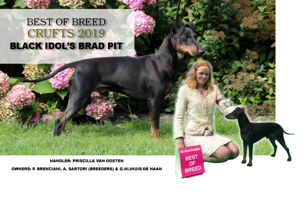 About us - Eaglespur & v d  Posthoornwieke Manchester Terriers