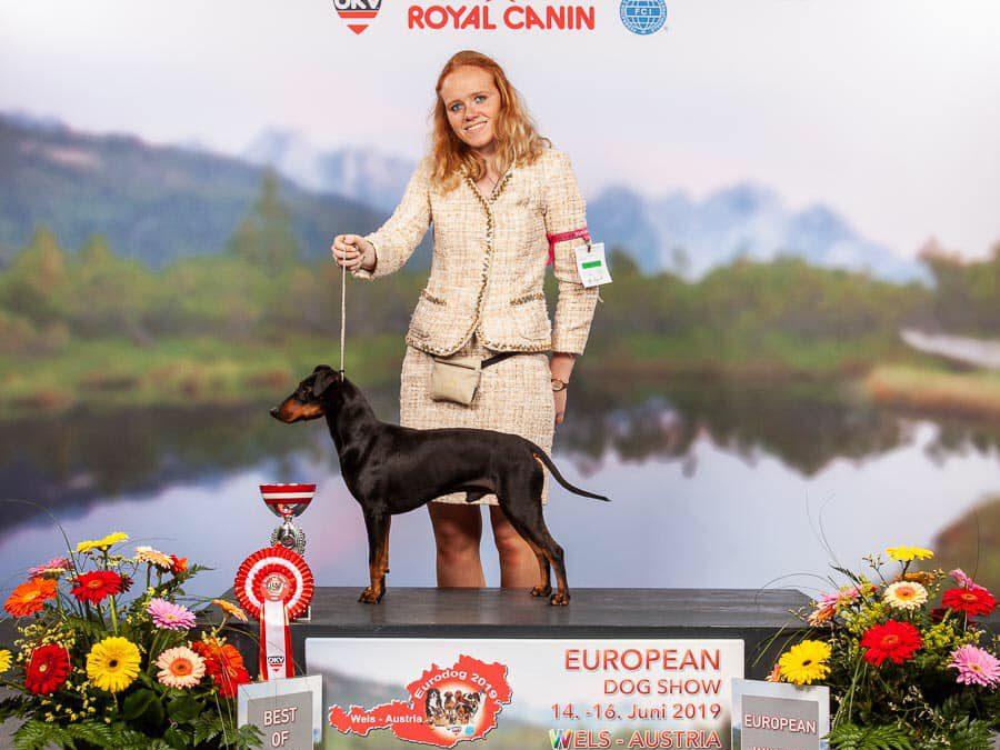 + European Dogshow Wels